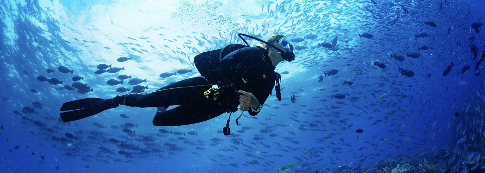 Immergersi a Varazze e dintorni: gli itinerari subacquei da non perdere